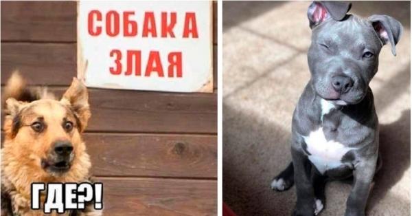 Юмор: Уморительные собаки, с которыми не бывает скучно (10 фото)