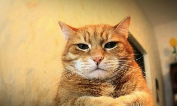 Сказ о том, как хозяева с котом воевали. И о хомяке.