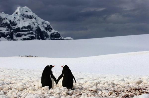 У животных тоже день влюбленных (25 фото)
