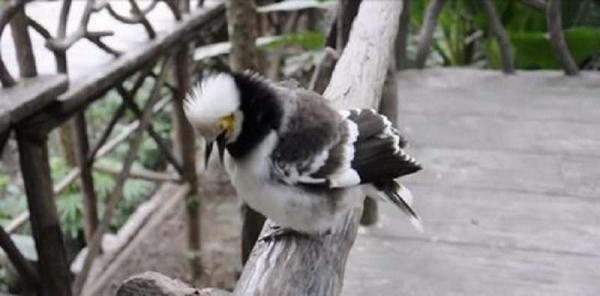 Юмор: Парень решил заговорить с птичкой, а она неожиданно ответила