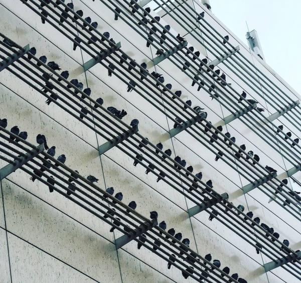 Фото дня: Музыка весны!
