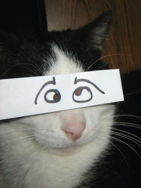 Такими кошек вы ещё не видели (21 фото)