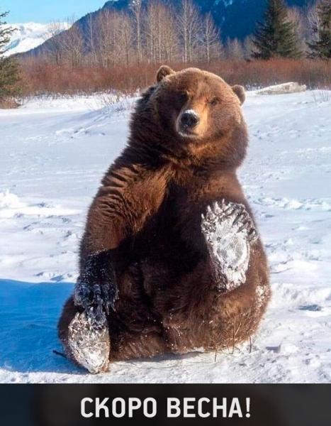 Фотографии животных, которые вызовут улыбку и подарят позитив (30 фото)
