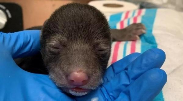 Пёс притащил домой милого щенка, который оказался вовсе не щенком и напугал хозяев (3 фото)