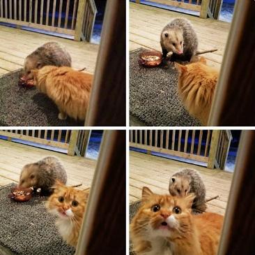 Забавные животные, которые поднимут настроение (30 фото)