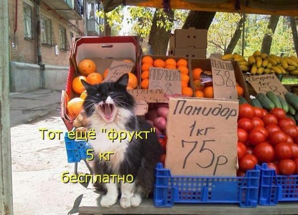 Пятнично-позитивная фотоколлекция забавных животных (30 фото)