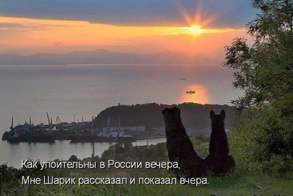 Картинки для хорошего настроения! (30 фото)