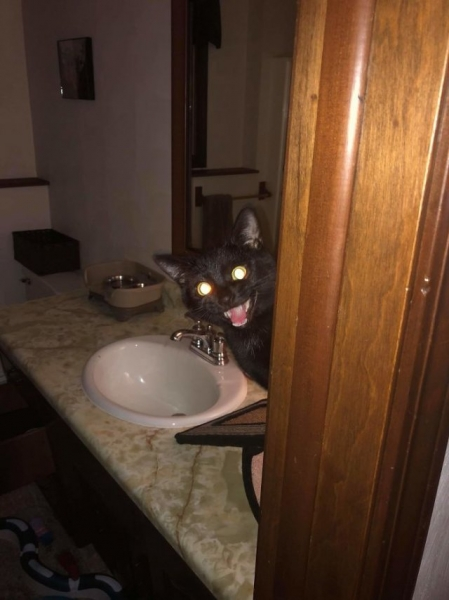 Что страшнее: чёрный кот или пятница 13? (35 фото)