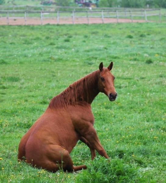 Смешно сидящие лошади (19 фото)