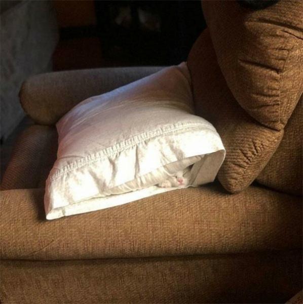 Где хочу там и сплю (25 фото)