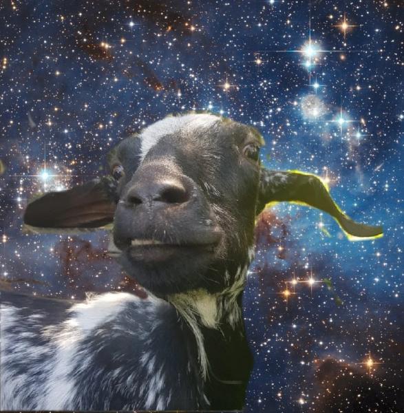 Занимательное о козах