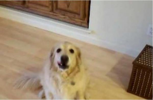 Юмор: Собаке сказали убраться в доме
