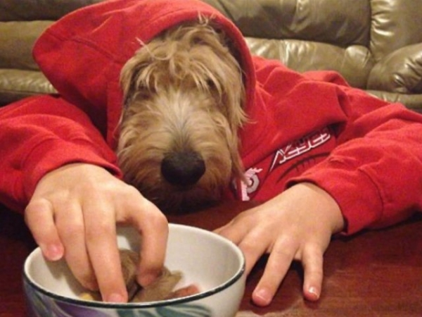 Скучающие на карантине люди фотографируют своих собак с человеческими руками (20 фото)