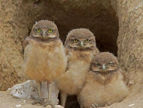 Птичий позитивчик (30 фото)