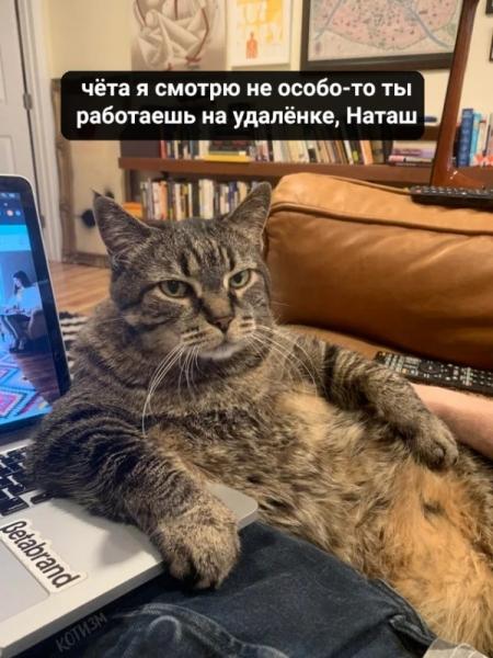 У кота под конторолем:) (6 фото)
