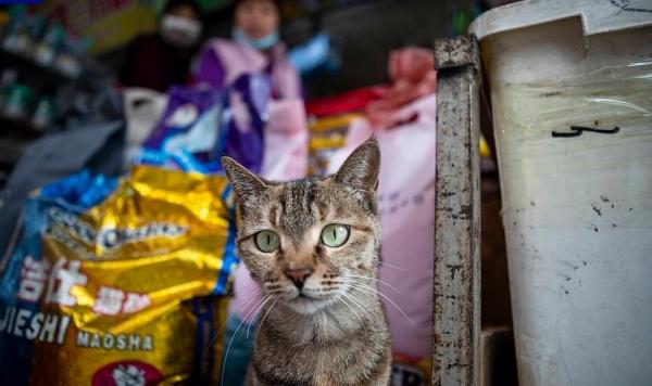 У уханьских кошек нашли коронавирус нового типа
