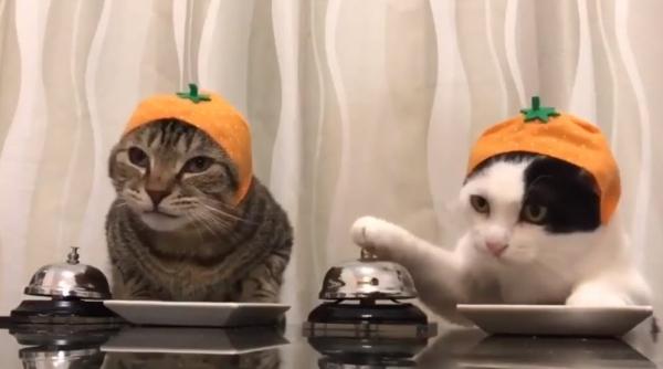 Забавное видео:  Коты - интеллигенты