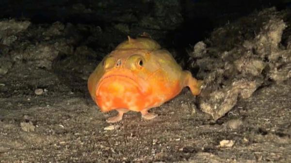 Загадочная рыба – гроб (5 фото)