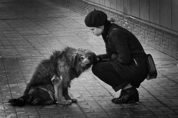 Мой друг — бездомная собака