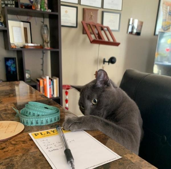 Животные помогают учиться и работать дома (18 фото)