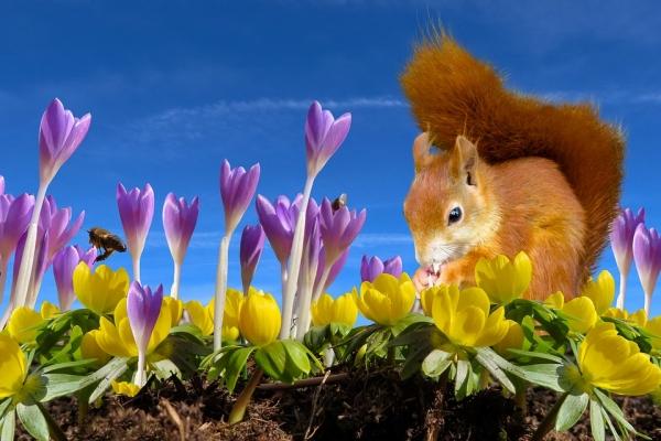 Весенние животные (30 фото)