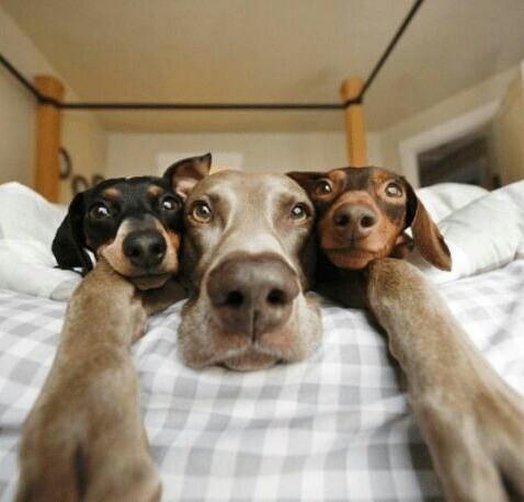 Милая троица (5 фото)
