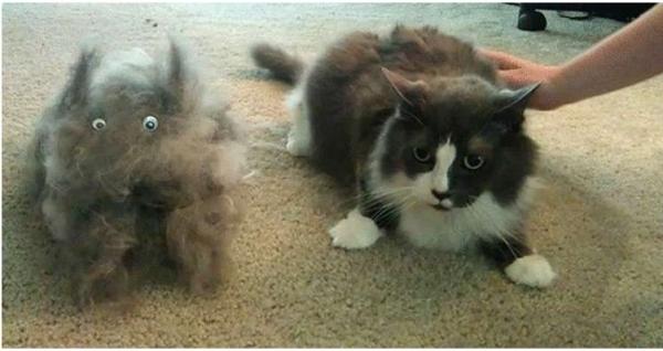 Юмор: Советы для Котов и Кошек по уходу за Человеком