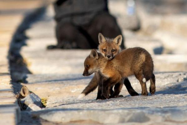 Топ-10 лучших фотографий с животными за прошлую неделю