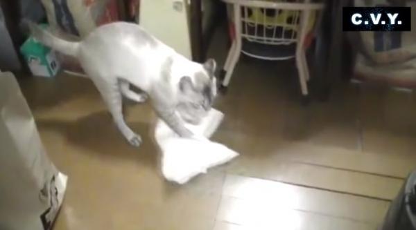 Кот моет пол и ругается на неряшливого хозяина