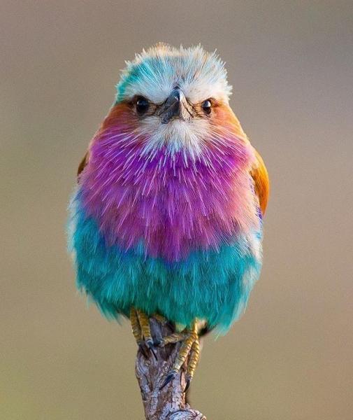 Расписные птицы неземной красоты (20 фото)