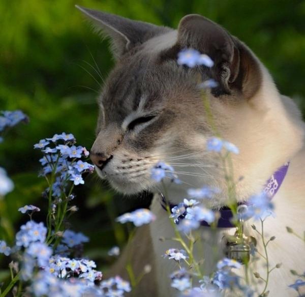 Котики очарованы прелестью цветов (25 фото)