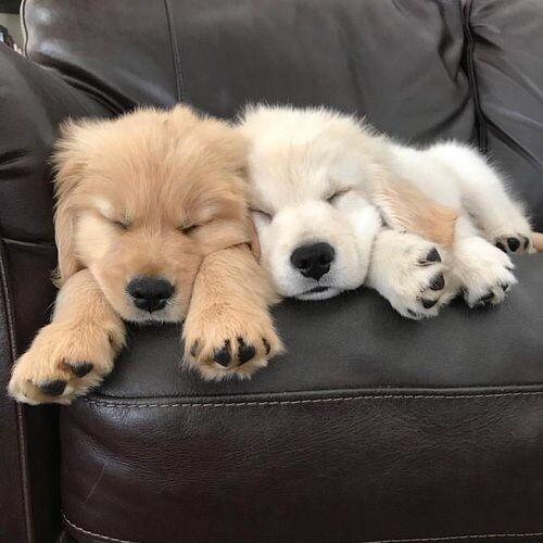 Собаки и кошки в одной подборке (30 фото)