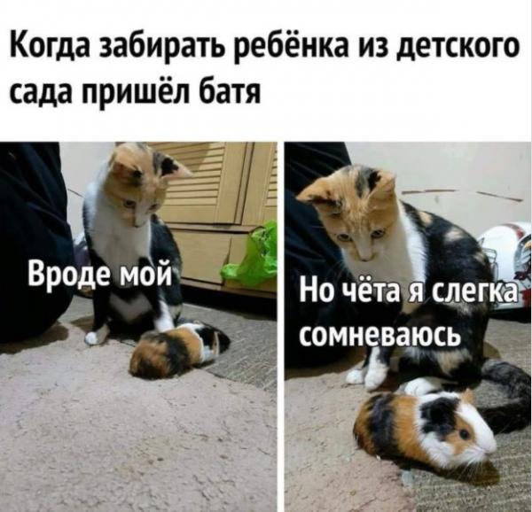 Позитив в фотографиях с животными ( 30 фото)