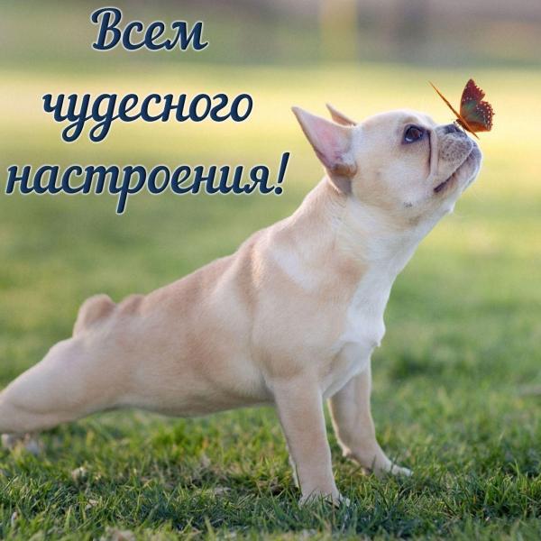 Настроение- Лето! И бабочки на носу (30 фото)