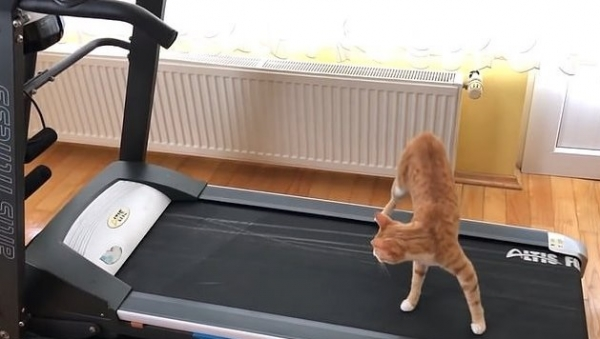 Юмор: Шайтан-машина! Котик и беговая дорожка