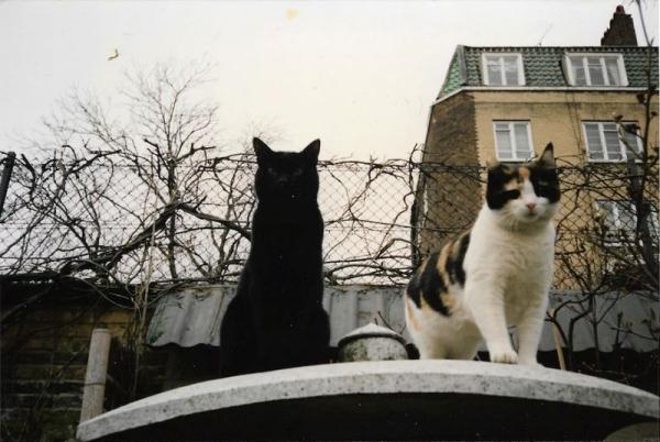 Самые известные кошки (6 фото)