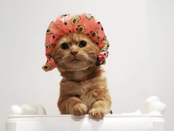 Кошки в шапочках для душа (18 фото)
