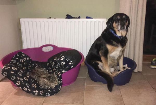 Пост о собачьей доброте и кошачьей наглости (25 фото)