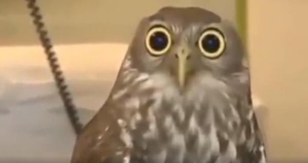 Забавное видео: Узнали себя? О работниках на примере мира животных