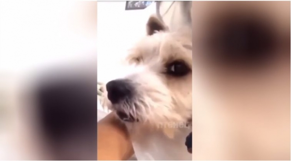 Забавное видео: Собака-подозревака