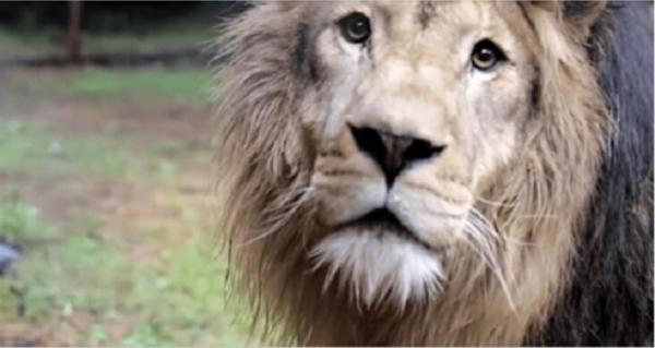 Это интересно: Эмоции животных, которые вышли на свободу из цирка