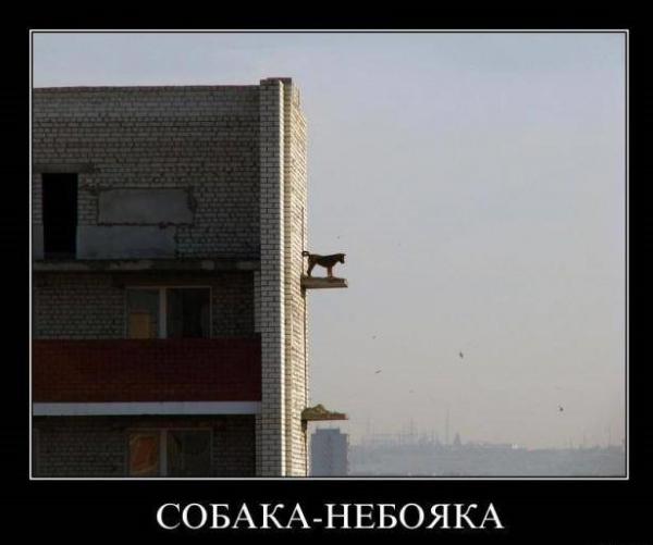 Демотиваторы про собак (30 фото)