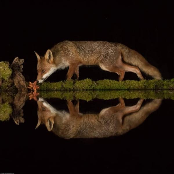 Шотландский фотограф вырыл в лесу пруд и сделал зеркальные фотографии дикой природы (24 фото)