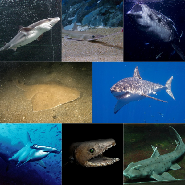 Топ 5: Самые кровожадные акулы