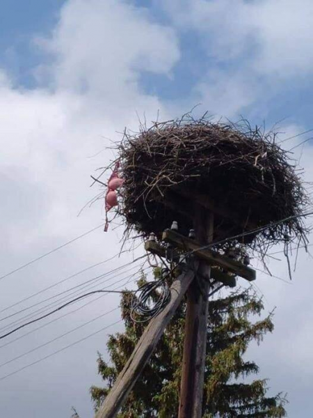 Птичьи гнёзда в необычных местах (12 фото)