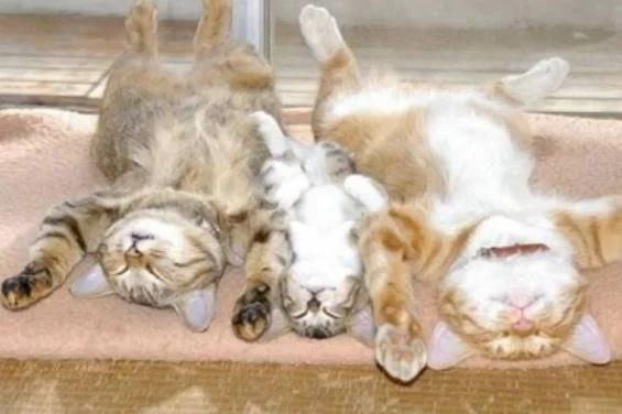 Это любовь: 10 невероятно трогательных кошачий семей, которые не оставят вас равнодушными