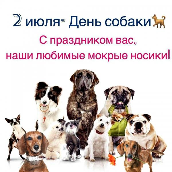 Очаровательные собаки, которые поднимут вам настроение (30 фото)