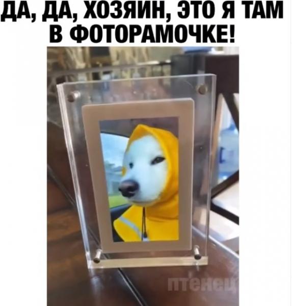 Юмор: Самый радостный пес