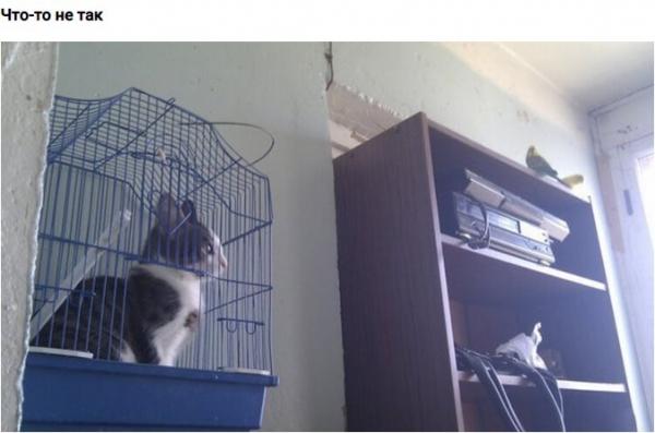 10 мест, в которых не должно было быть кота, но вот он:)