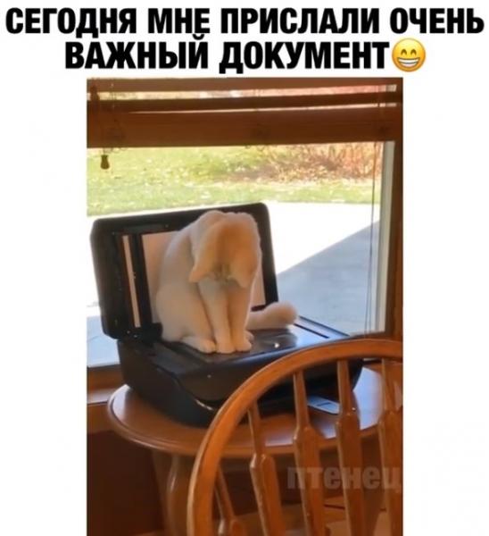 Юмор: Кот прислал хозяину: привет